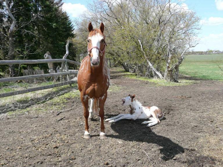 Epona-Equine-Veterinary-P1030882